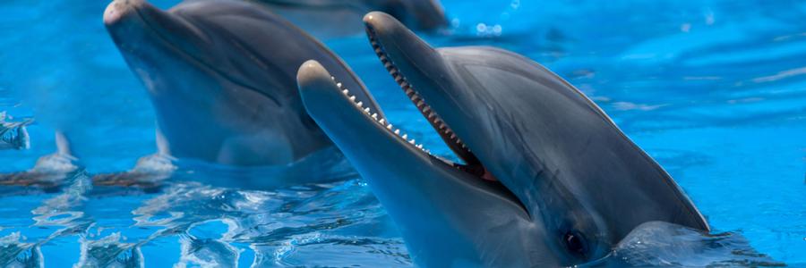 LEDビジョン新設! 水族館・八景島シーパラダイス「海の動物たちのショー」